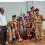NCC - Tree Plantation